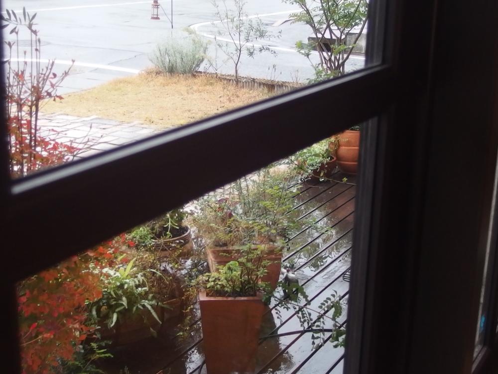 雨の日も心を落ち着かせてくれる緑
