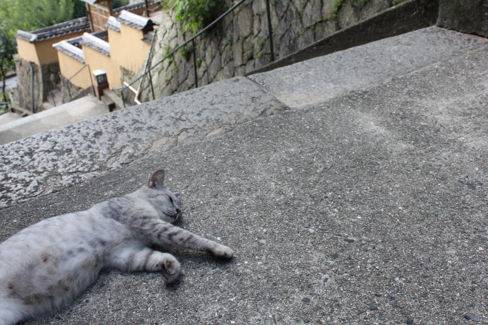 尾道の坂道に住んでいる猫たち