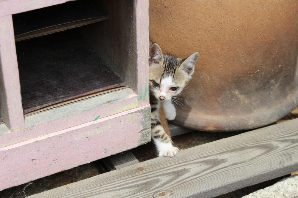 岡山県美星町のカフェでネコに遭遇