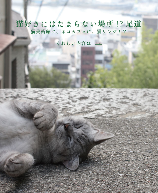 猫好きにはたまらない場所 !?尾道
