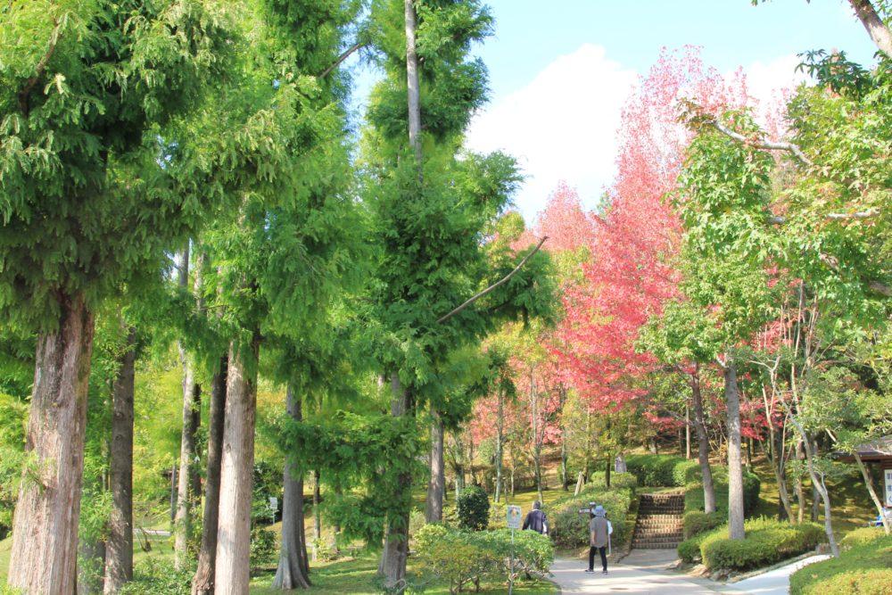 紅葉は少し早かったけれど「鏡山公園」