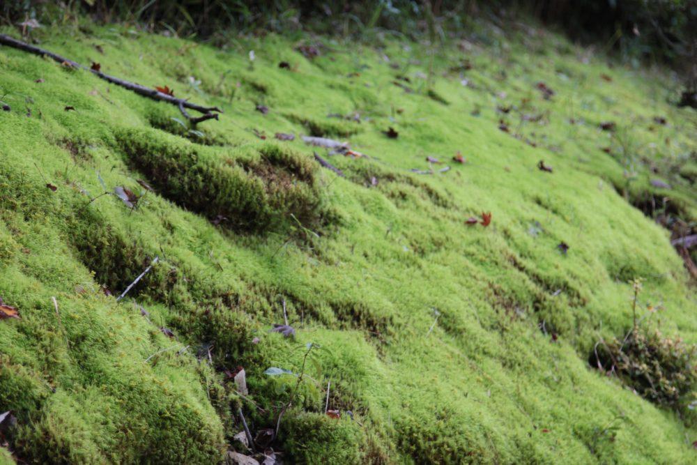 苔むす「鏡山公園」